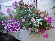 Public Floral Display.