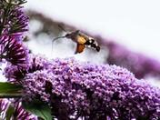 buzy bees