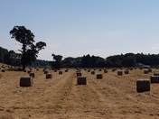 Bales of Straw in a field at Abbots Leigh