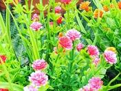 Beautiful Weston Flowers