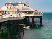 Cromer Pier and Gull Selfie.