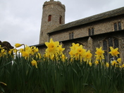 Churches: Daffodils