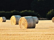 Harvest Cley Next the Sea