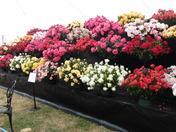 sandringham flower show.