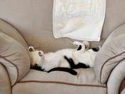 JASPER CATCHING UP ON HIS SLEEP