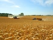 Hadleigh Harvest 2018