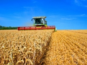 Harvest time in Hadleigh 2018