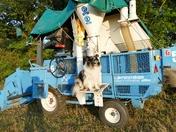 Tanzi on the mini harvester.