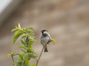 pic of resting bird