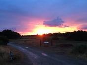 Kelling Heath, Sunshine after the rain.