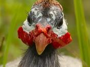 A prehistoric looking bird.