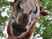 Happy Horse at Earsham Wetland Centre