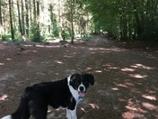 A walk on Woodbury Common with my dog
