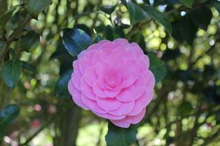 Weekly Challenge - Single Flower