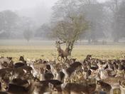 Holmham deer park