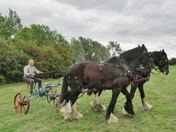 Working Horses at the Purleigh Country Show
