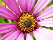 Single Flower.(photo challenge)