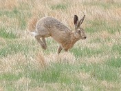 Hare getting its months mixed up