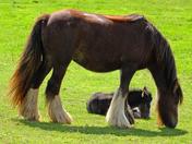 Foal :)