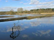 Suffolk Landscapes - Lackford Lakes