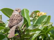 More garden birds