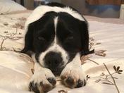 Photo Challenge - Pets