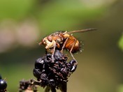 Fly and Beetle