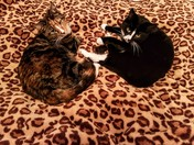 Winston and Cassy