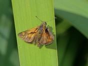 Moth relazing
