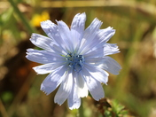 Single flower. Photo Challenge