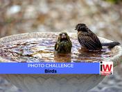 📸 PHOTO CHALLENGE: Birds 📸