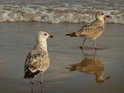 Visit to Bournemouth beach.