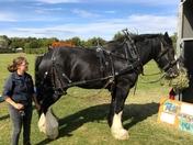 The Falconry & Countryside Fair Stonham Barns 2018