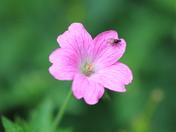Single Flower Challenge