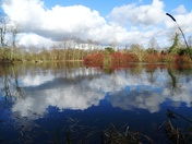 Culford Lake in reflection.(photo challenge)