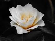 Photo Challenge: Single Flowers
