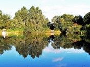 Reflections on Summer Lane Pond