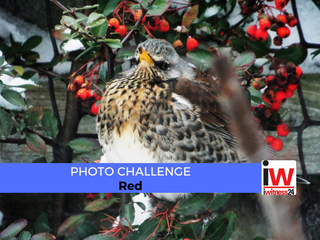 📸 PHOTO CHALLENGE: Red 📸
