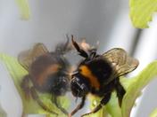 reflective bee.