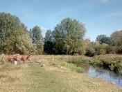 Buttercup's River Adventure
