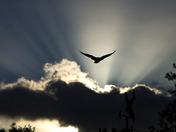 Crepuscular rays over Harleston