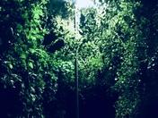 Narnia Lamp