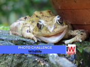 📸 PHOTO CHALLENGE: Wildlife 📸