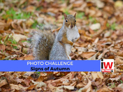 📸 PHOTO CHALLENGE: Signs of Autumn 📸