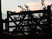 Squirrel gate