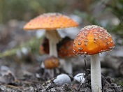 Beautiful fungi at Minsmere,