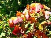 Photo Challenge - Autumn
