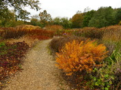 AUTUMN, CHANGING COLOUR IN THE PARK