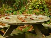 AUTUMN, PICNIC TABLE