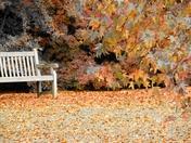 Photo Challenge: Autumn
